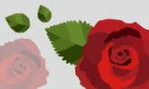 빨간 장미를 위하여,광주광역시 서구