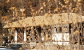 투쟁 끝에 선 봄,대전광역시 중구