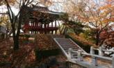낙엽을 밟으면서,경상북도 김천시