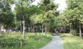 작은 길을 걸으며,대구광역시 서구