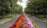 꽃길 따라 걸으며,강원도 춘천시
