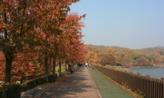 가을빛으로,경기도 성남시