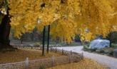 누정이 있는 가을 풍경 ,경상남도 밀양시
