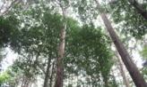 나뭇잎 사이,부산광역시 서구
