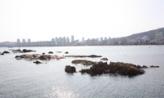바다 거북이,부산광역시 수영구