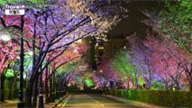 대구 이월드 벚꽃 야경,대구광역시 달서구
