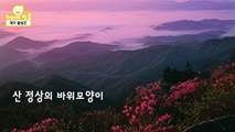 [명물] 진달래 군락,대구광역시 달성군