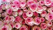 향기로 가득한 양재동 꽃시장,서울특별시 서초구