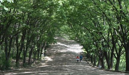 도심에서의 휴양! 계양산 산림욕장,인천광역시 계양구