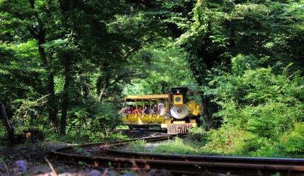 칙칙폭폭, 기차 타고 즐기는 곶자왈의 아름다움 - 에코랜드 테마파크,제주특별자치도 제주시