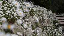 겨울을 기억하는 봄