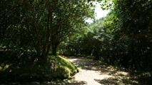 선명한 숲,전라남도 광양시