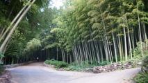 대나무 향이 스며들다