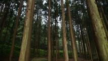 마음까지 내어주는 편백나무 숲길 따라