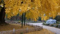 누정이 있는 가을풍경