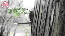 [문화] 유네스코 세계자연유산 거문오름,제주특별자치도 제주시