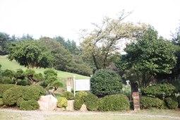 양정동 배롱나무,국내여행,여행지추천