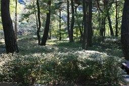 성주산자연휴양림,국내여행,여행지추천