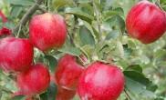 사과 과수원이 향기로운 곳, 거창 사과테마파크