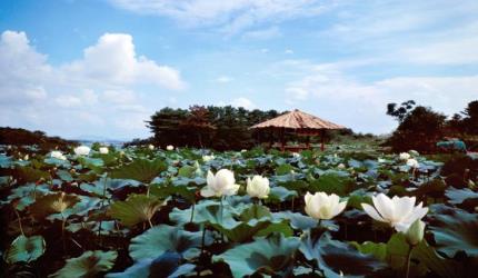 순백의 연꽃이 피어나는 곳, 청운사,전라북도 김제시