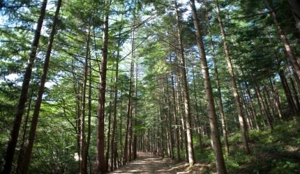 자연휴식년제로 한층 깊어지는 운문산 걷기 길,경상북도 청도군