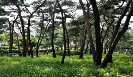 솔향기 가득한 마을 숲 '솔밭근린공원',서울특별시 강북구
