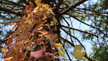 가을을 밝히다