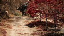 가을로 향하는 길