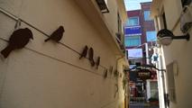 사라진 새들
