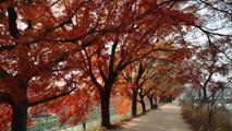 가을 놀이