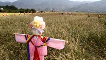 허수아비 밭