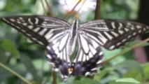 일 년 내내 나비가 나는 곳