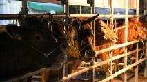 와牛 횡성, 名品 한우
