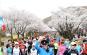 경주벚꽃마라톤대회,지역축제,축제정보