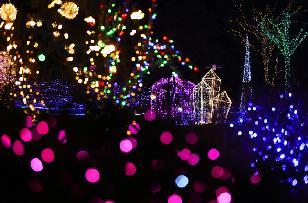 별빛따라 두메향기,지역축제,축제정보