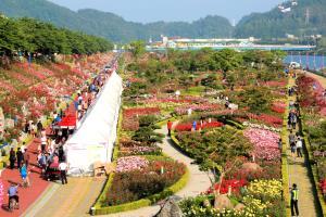 삼척장미축제,국내여행,음식정보