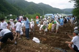 수주계곡축제,강원도 영월군,지역축제,축제정보