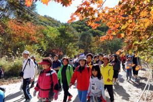 금강산가는 옛길 걷기대회,강원도 양구군,지역축제,축제정보