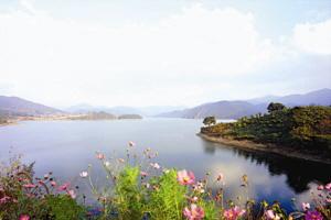 옥정호 꽃걸음빛바람축제,전라북도 진안군,지역축제,축제정보