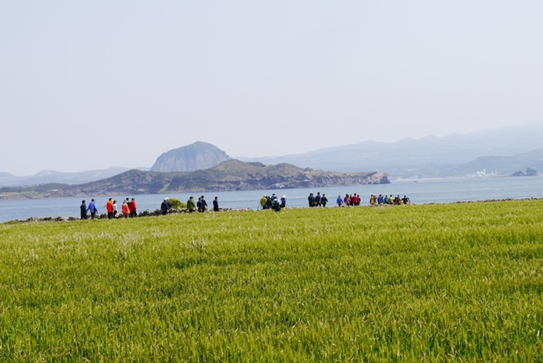 가파도청보리축제 ,제주특별자치도 서귀포시,지역축제,축제정보
