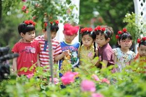 서울장미축제,서울특별시 중랑구,지역축제,축제정보