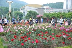 가족사랑장미축제,대구광역시 달서구,지역축제,축제정보