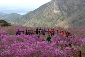 비슬산참꽃문화제,대구광역시 달성군,지역축제,축제정보
