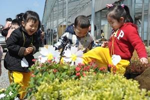 동구불로화훼봄꽃축제,대구광역시 동구,지역축제,축제정보