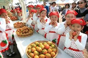 대저토마토축제,부산광역시 강서구,지역축제,축제정보