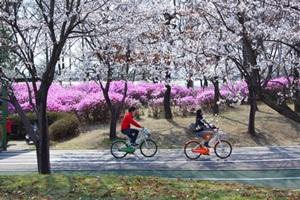 고양국제꽃박람회,국내여행,음식정보