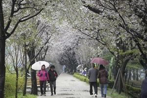 광명 Happy페스티벌,경기도 광명시,지역축제,축제정보