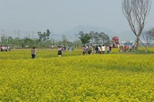구리유채꽃축제,경기도 구리시,지역축제,축제정보