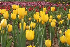 용인봄꽃축제,국내여행,음식정보