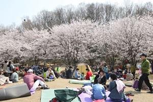 의왕벚꽃축제,국내여행,음식정보